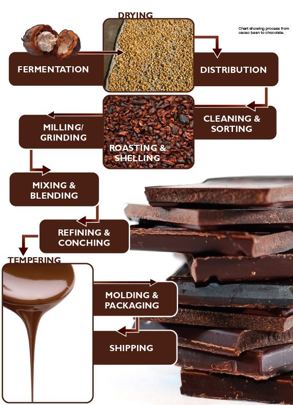 how to turn cocoa beans into chocolate