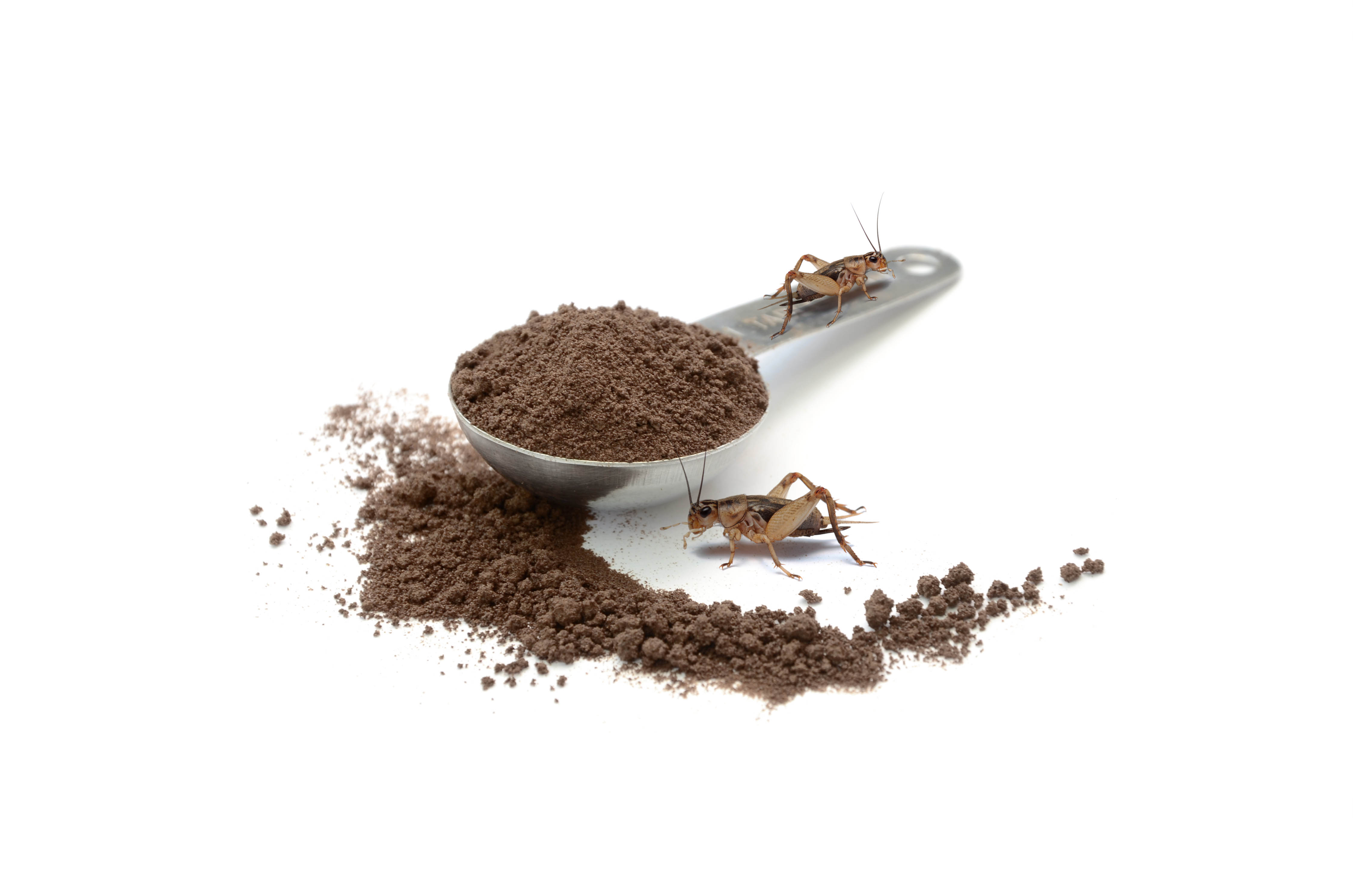 Coffee ground in stainless table spoon 2