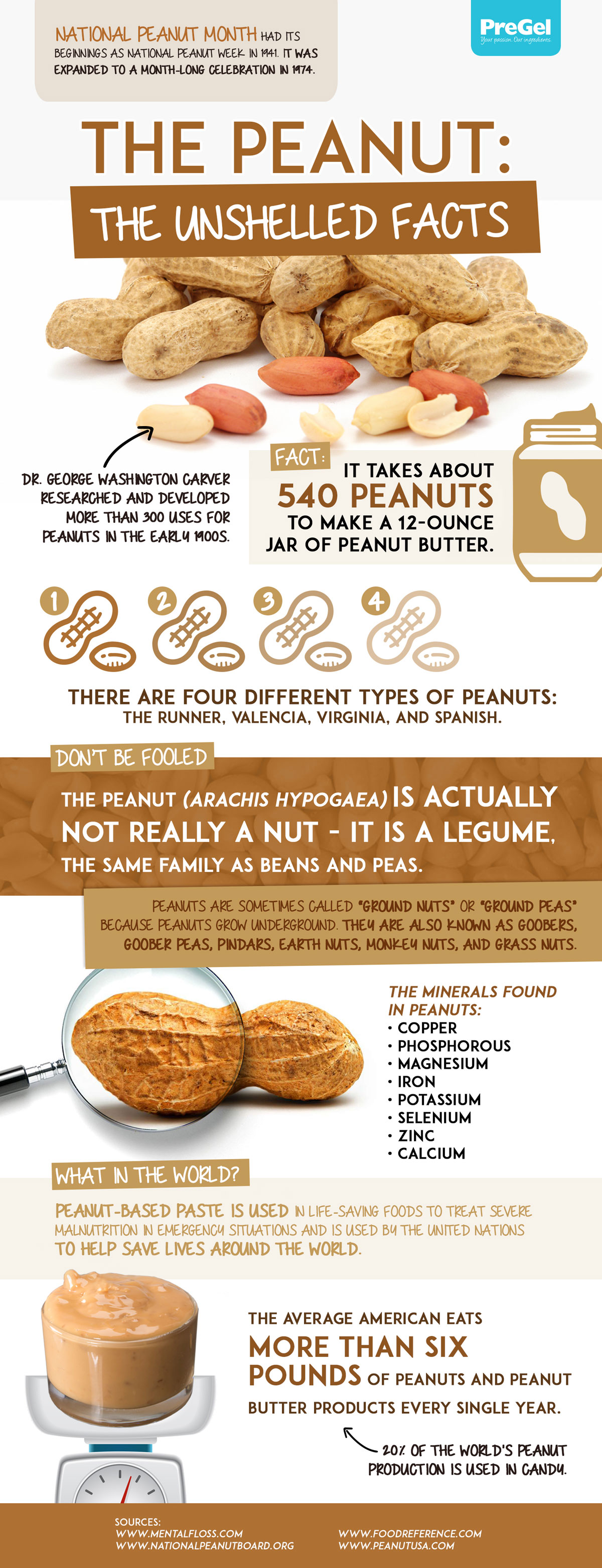 Peanut Infographic Large